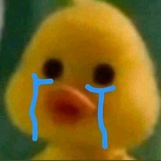 Vịt con màu vàng đáng yêu khóc