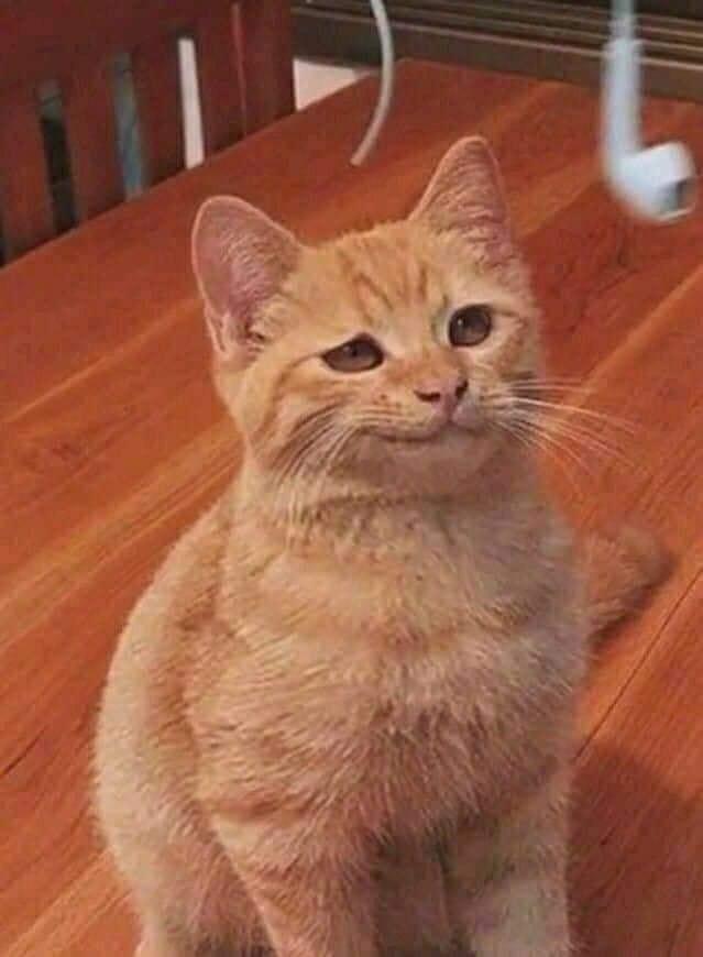 Mèo vàng nhếch mép cười đểu