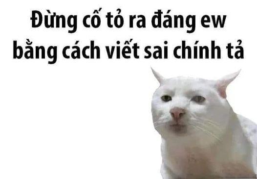 Mèo trắng nói đừng có tỏ ra đáng yêu bằng cách viết sai chính tả