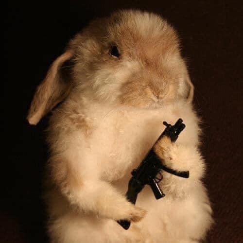 Thỏ cầm súng AK47