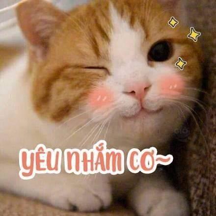 Mèo dễ thương nháy mắt yêu nhắm cơ