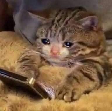Mèo lướt điện thoại khóc ướt mắt