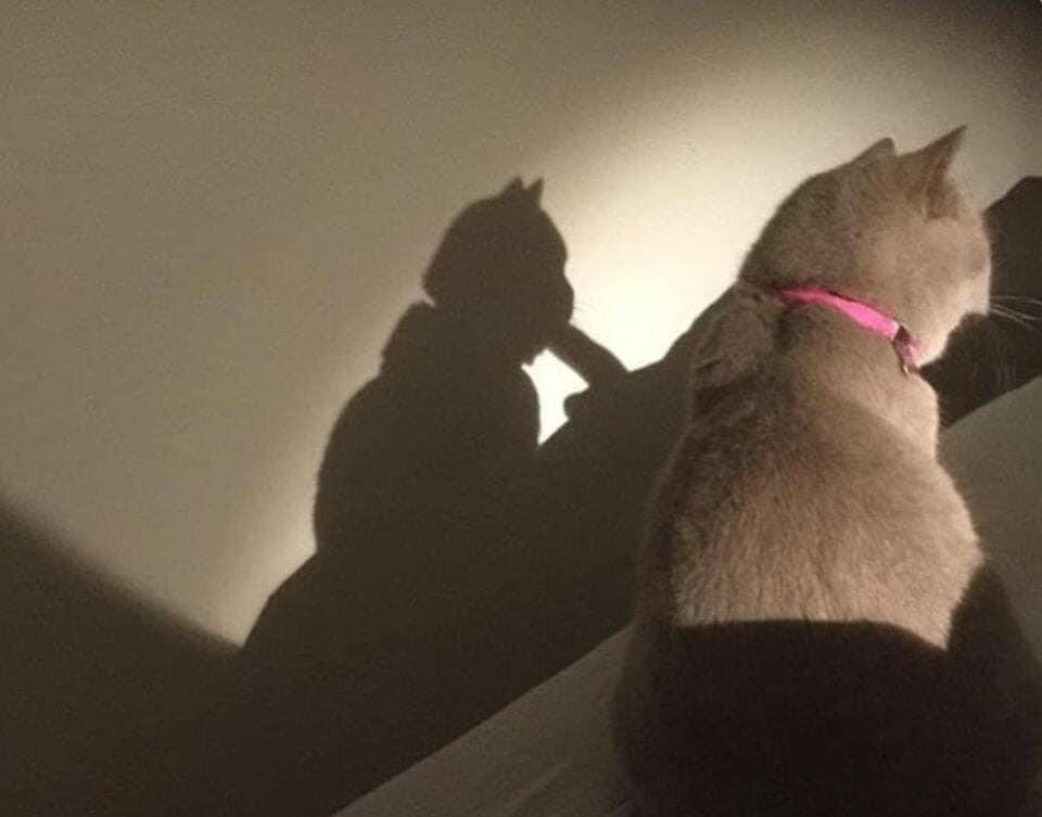 Cái bóng của con mèo nhìn như đang buscu