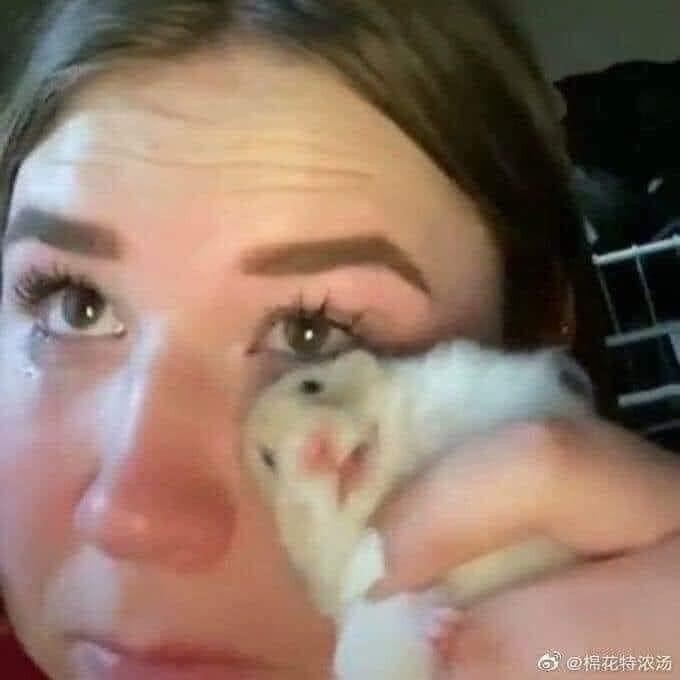 Cô gái dùng chuột Hamster lau nước mắt