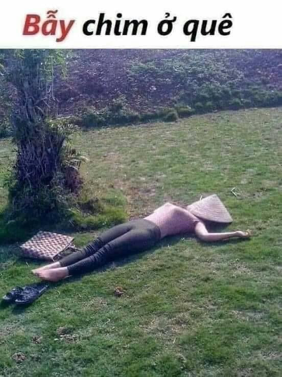 Bẫy chim ở quê: cô gái nằm úp nón lá lên mặt