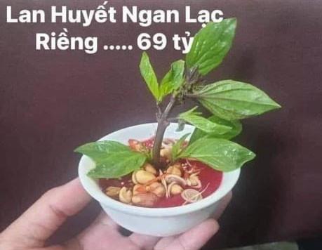 Lan Huyết Ngan Lạc Riềng 69 tỷ (tiết canh ngan rau húng)