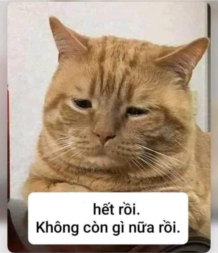 Mèo vàng buồn bã nói hết rồi, không còn gì nữa rồi